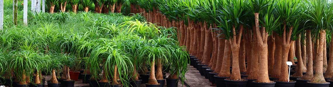 planten 1